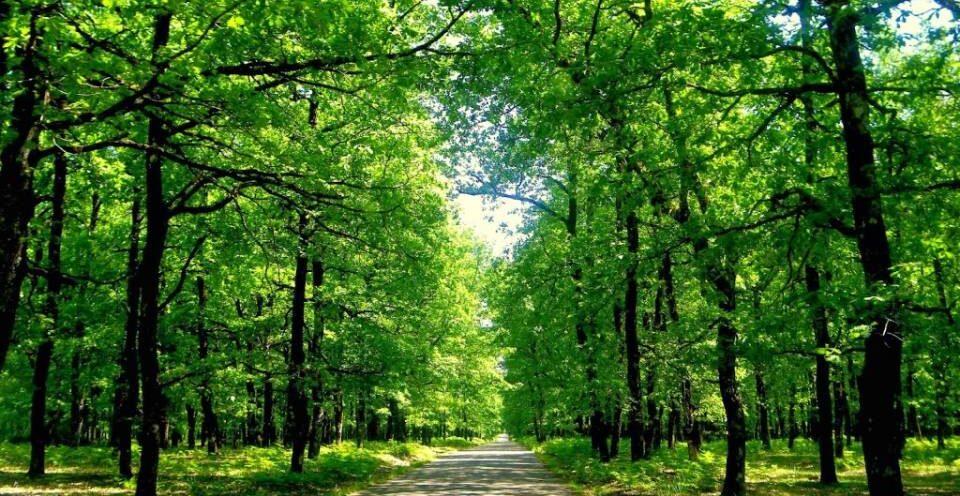 Ξεκίνησε η ανάρτηση δασικών χαρτών - Προθεσμία ενστάσεων