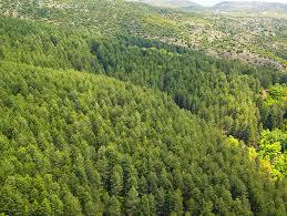 Δασικές εκτάσεις: Τεκμήριο κυριότητας του Δημοσίου